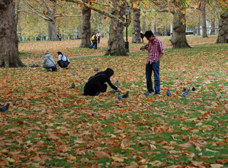 伦敦公园一角