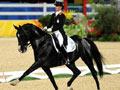 奥运项目-盛装舞步