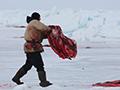 捕猎海豹现杀鲜吃