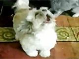 爆笑!一只屌丝狗的愤怒