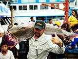 【第二集】怪鱼迷踪