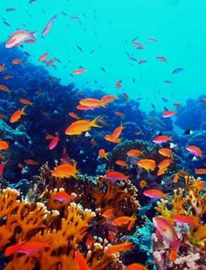 【第二集】清澈的红海
